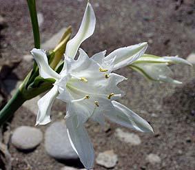 flora en fauna bij Almerimar