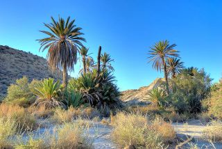 Sendero del Desierto